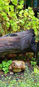 pp under log